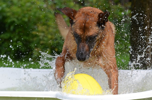 conseil piscine pour chien