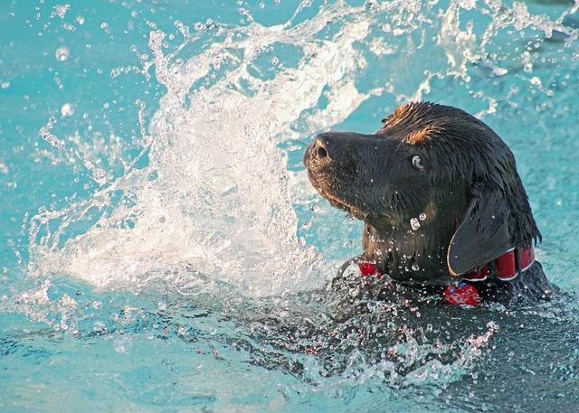guide d'achat piscine pour chien