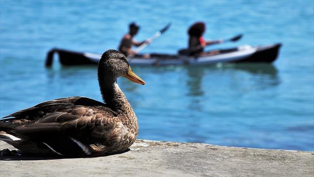 marque kayak de chasse au canard