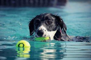 marque piscine pour chien