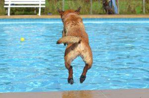 meilleur piscine pour chien