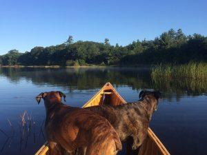 meilleurs kayak pour chien
