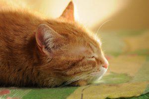 tapis de refroidissement chat