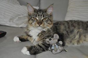 jouet pour chat