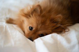 lits pour chien en bois