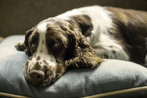 lits pour chiens