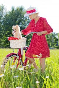 paniers vélos chien