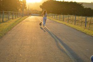 laisse de jogging pour chien