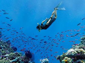 Plongée corail
